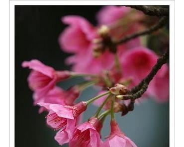 Bild der Woche 10/2010: Taiwan im Frühling
