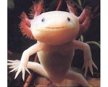 Axolotl Roadkill: Der Hype frisst seine Kinder.