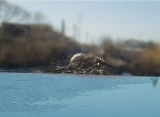 Sauberes Wasser für Rumänen in weiter Ferne