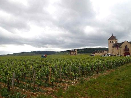 Weinberge in Vougeot. - © Foto: Erich Kimmich