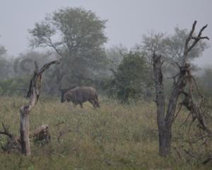 Der Wildnis nahe – Eine Safari im Krügerpark