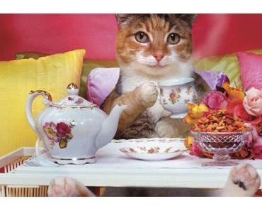 Die Katzenbild-Kuratorin präsentiert: Katzen beim Kaffeetrinken