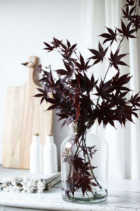 japanischer ahorn hinter und im glas. Black Bedroom Furniture Sets. Home Design Ideas
