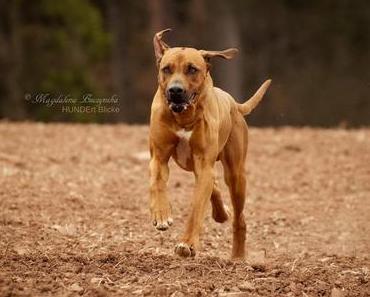 Bewegung von Hunden einfangen – Tipps für scharfe Fotos!