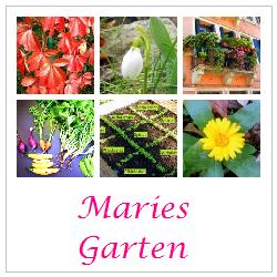 Gartenliebe - und eine tolle Linkparty bei Eclectic Hamilton