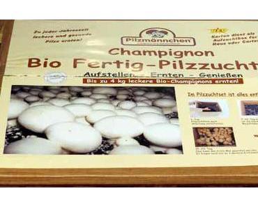 Der Pilzmännchen Test – Bio-Champignons für zu Hause