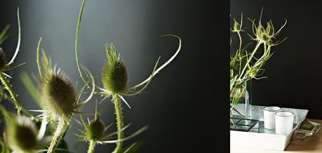 Blog + Fotografie by it's me! - Collage von Disteln als Vasenblume