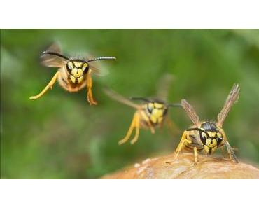 Die Wespen vom Gartentisch fernhalten