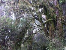 Mystische Wälder Neuseelands