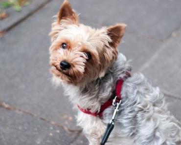 Nationaler Tag des Hundes in den USA – der amerikanische National Dog Day