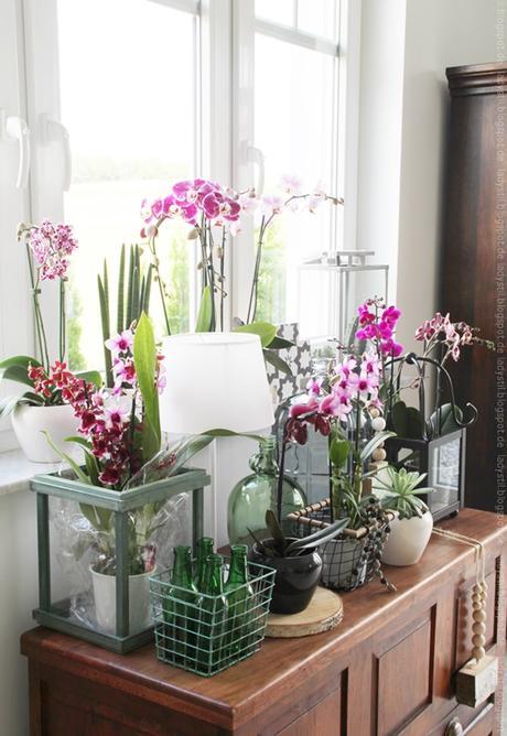 Tag der orchidee styling am deko donnerstag - Orchideen deko ...