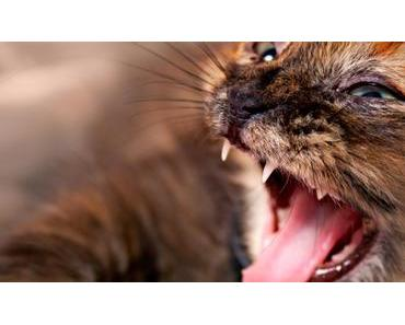 Deine Katze beißt und kratzt? Das kannst du gegen die Aggressivität bei Katzen machen