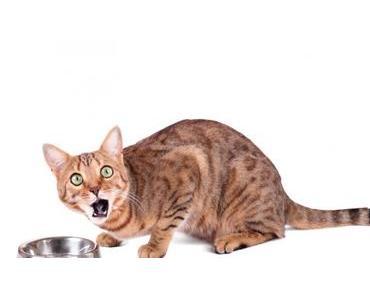 Deine Katze schlingt? 5 Tipps gegen zu hastiges Fressen