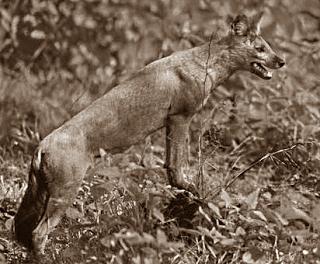 Aventin Blog: Der wilde Hund • Vergessene Vorsätze • Fabel von Aesop [del.icio.us]