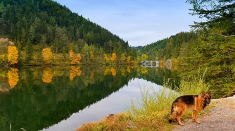 Herbst-Mariazellerland-Johann-Pfeffer_155220