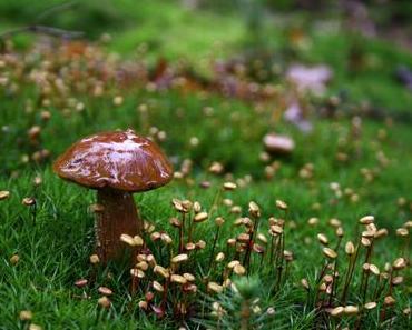 Tag der Pilze in den USA – der amerikanische National Mushroom Day