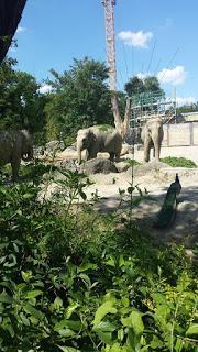 tierpark hellabrunn der zoo m nchens. Black Bedroom Furniture Sets. Home Design Ideas