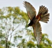 Neuseelands Vögel