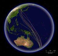 Bar-tailed_Godwit_migration