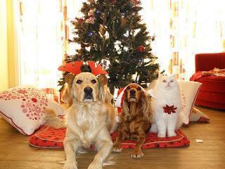 Ihr Kinderlein kommet und Ihr Weihnachtsgeld? Legt Ihr Boss was drauf?