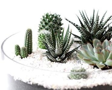 MINI SUCCULENT GARDEN {interior, DIY}