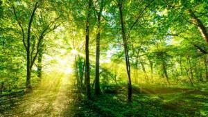 Natur ganz nah – ein Waldspaziergang mit Kindern