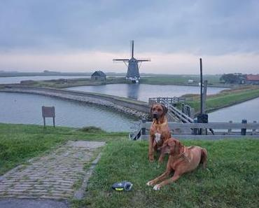 Hunde würden nach Texel fahren