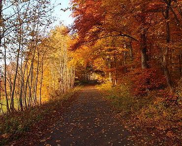 Leuchtender Herbst …