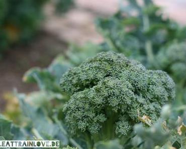 Esst mehr Brokkoli! Warum Brokkoli so toll für uns ist!