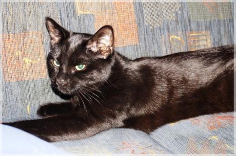 mit purina zum wohlbefinden der katze. Black Bedroom Furniture Sets. Home Design Ideas