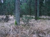 Familie, Waldluft Wildschweine
