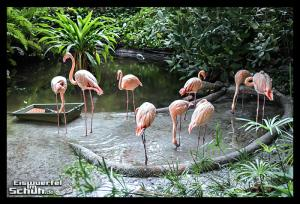 EISWUERFELIMSCHUH - Lauf Tropen Tropical Islands 2015 (82)