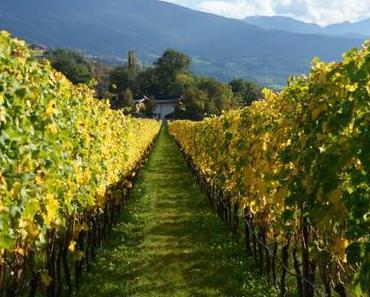 Wein aus Südtirol – ein Besuch beim Kloster Neustift