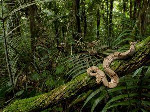 Übles Spiel im Regenwald