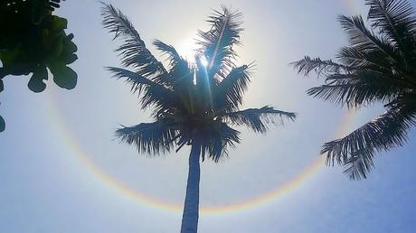 philippinenblog_fotoparade_palmtree_round_rainbow