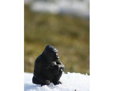 Explodiert die Welt? Plusgrade im ewigen Eiswetter aus den Fugen: Nordpol bis zu 50 Grad über normal!