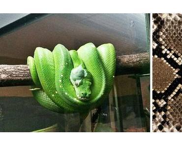 Tag der Schlange in den USA-  der amerikanische National Serpent Day