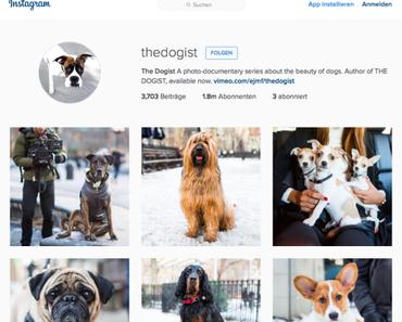 The Dogist – Ein Hundefotograf auf Instagram