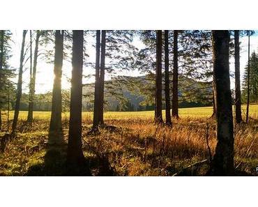 """Bild der Woche: Mooshuben """"Winterwald"""""""