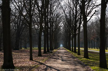 Allee an der Karlswiese in Kassel