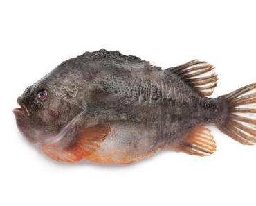 Welchen Fisch kann man kaufen