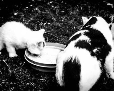 Respektiere-Deine-Katze-Tag – der amerikanische Respect Your Cat Day