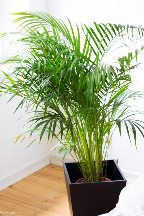 gr ner wohnen meine pflanzengeschichte eine shop empfehlung. Black Bedroom Furniture Sets. Home Design Ideas