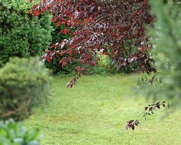 """""""Mein"""" Garten und mein Balkon"""