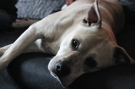 vegan mit hund rezepte und tipps nicht nur f r veggie hunde. Black Bedroom Furniture Sets. Home Design Ideas