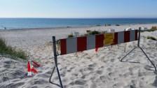 Strandhaferanpflanzung am Strand in Vitte