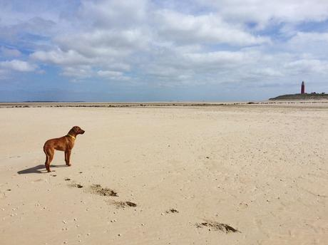 Texel - Dayo am Strand 1