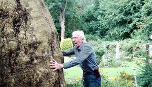 Foto: Alter Ahornbaum Neses Garten