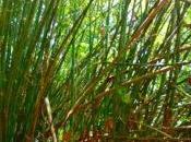Ursprüngliches Malaysia Taman Negara: Dschungel-Erlebnis Einsteiger