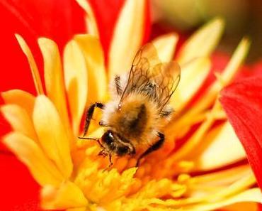 Tritt-nicht-auf-eine-Biene-Tag – der Don't Step on a Bee Day in den USA